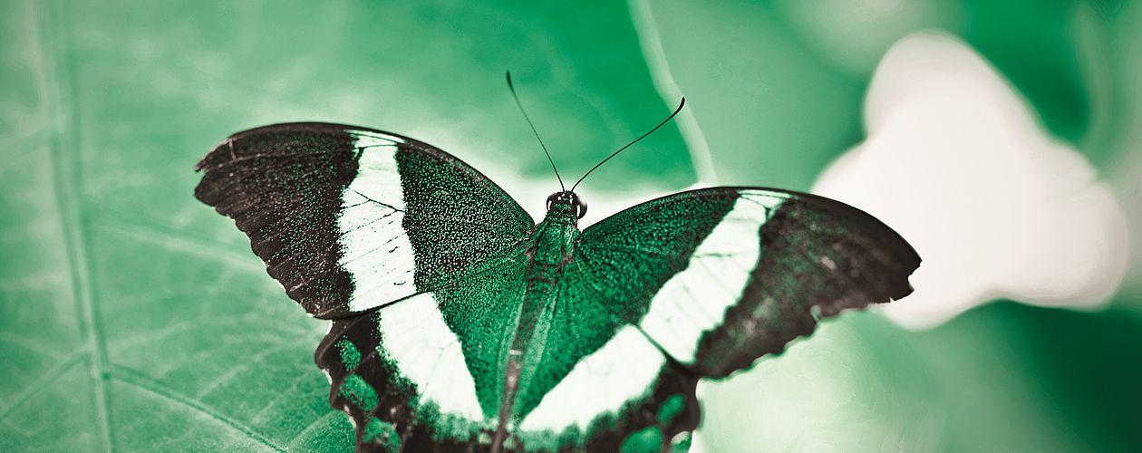 Grün ist die Farbe der Natur. Sie symbolisiert eine ruhige Kraft und Regeneration.