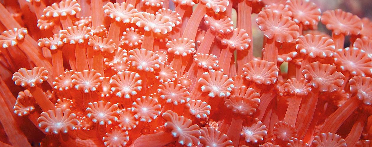 Orangetöne stehen für quirlige Lebendigkeit, Exotik und Elan.