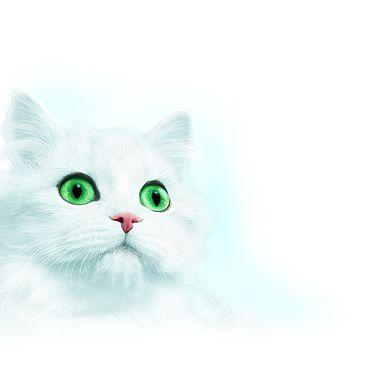 Alpina weiße Katze.